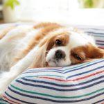 大切な家族の 犬・猫の総合情報サイト『PEPPY(ペピイ)』という名前は『HAPPY』からきている!